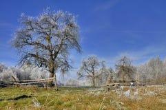 Natura nell'orario invernale Immagine Stock Libera da Diritti