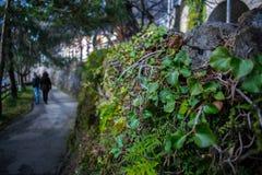 Natura nella città Fotografia Stock