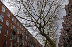 Natura nella città Immagini Stock Libere da Diritti