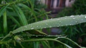 Natura nella mattina fotografia stock libera da diritti