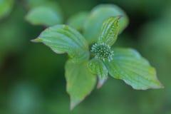 Natura nella primavera con le giovani foglie e germogli in una foresta immagini stock