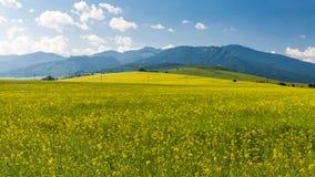 Natura nella regione di Liptov, Slovacchia di estate 2015 Fotografia Stock