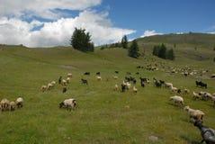 Natura nelle montagne di Altai Fotografie Stock
