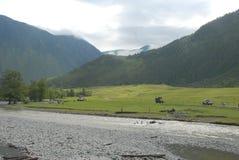 Natura nelle montagne di Altai Immagine Stock