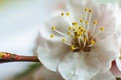 Natura obudzi fotografia stock