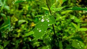 Natura, ogród, kwiat, zieleń, drzewo Zdjęcie Stock