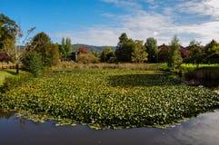 Natura otacza pięknego Valdivia, Chile Fotografia Royalty Free