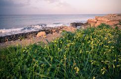 Natura Północny Cypr obrazy royalty free