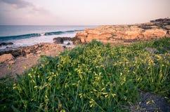 Natura Północny Cypr zdjęcie stock