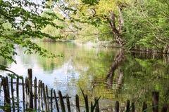Natura, parco Regno Unito Fotografia Stock Libera da Diritti