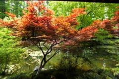 Natura parka sceneria, Hangzhou zdjęcia stock