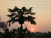 Natura piękno zmierzchu punkt z drzewem Fotografia Royalty Free