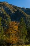 Natura piacevole di colori di autunno di fine dell'estate Fotografia Stock