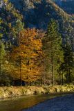 Natura piacevole di colori di autunno di fine dell'estate Immagine Stock