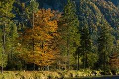 Natura piacevole di colori di autunno di fine dell'estate Immagine Stock Libera da Diritti