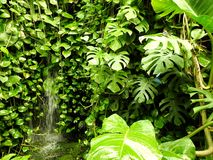 Natura, piante della parete, vegetazione, farfalla Immagine Stock