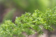 Natura, piante, erba verde, primo piano, flora, carte da parati Immagini Stock Libere da Diritti