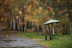 Natura piovosa di autunno del parco di autunno della città dell'Estremo-Oriente della Russia Fotografia Stock Libera da Diritti