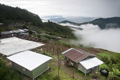 Natura plantaci deaktywaci miejsce Obrazy Royalty Free