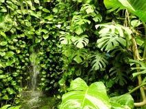Natura, plantas de la pared, vegetación, mariposa Imagen de archivo
