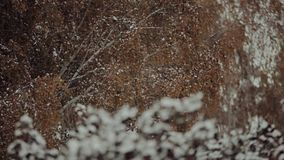 Natura po pierwszy opadu śniegu zbiory wideo