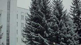Natura po pierwszy opadu śniegu zdjęcie wideo