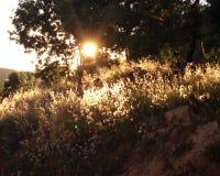Natura Pod Złotym światłem słonecznym Obraz Stock