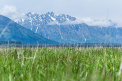 Natura przy Uroczystym teton parkiem narodowym Fotografia Stock