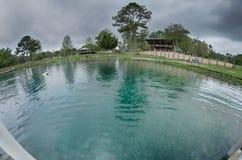 Natura przy vortex skacze Florida na deszczowym dniu Zdjęcie Royalty Free