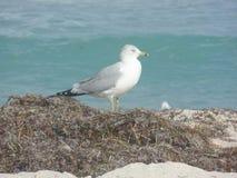 Natura ptak obrazy royalty free