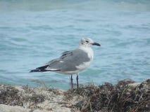 Natura ptak zdjęcia royalty free