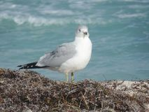 Natura ptak zdjęcie stock