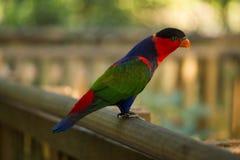 Natura & ptaki Zdjęcia Stock