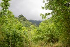 Natura pura al santuario di fauna selvatica di Umphang, Tak Province, Tailandia nordoccidentale fotografia stock
