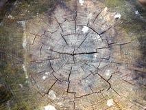 Natura Rżnięty bagażnik drzewo obrazy royalty free