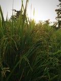 Natura ranek segregujący Obrazy Stock