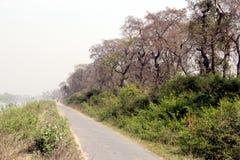 Natura Rishikesh fotografia stock libera da diritti