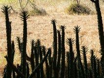 Natura rośliny Obraz Stock