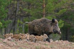 Natura russa, zona di Voronezh Immagine Stock