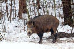 Natura russa, zona di Voronezh Fotografia Stock