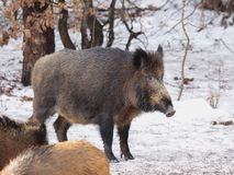 Natura russa, zona di Voronezh Fotografia Stock Libera da Diritti