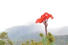Natura a Sabah fotografie stock libere da diritti