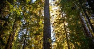 Natura scenica Washington State - parco nazionale olimpico fotografie stock