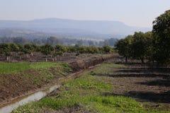 Natura segregująca drzewo rzeki agronomia Obrazy Stock