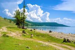 Natura selvaggia della Mongolia La strada reale intorno al lago Hovsgol Fotografia Stock Libera da Diritti