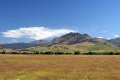 Natura selvaggia della Nuova Zelanda Fotografia Stock