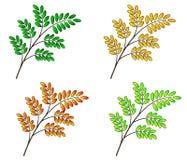 natura sezonowa royalty ilustracja