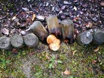 Natura silna Artystyczny spojrzenie w roczników żywych colours Zdjęcie Stock