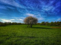 #nature. Sky grassland nature cloud tree grass#green Royalty Free Stock Photos