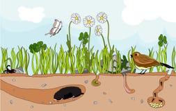 Natura sotterranea illustrazione vettoriale